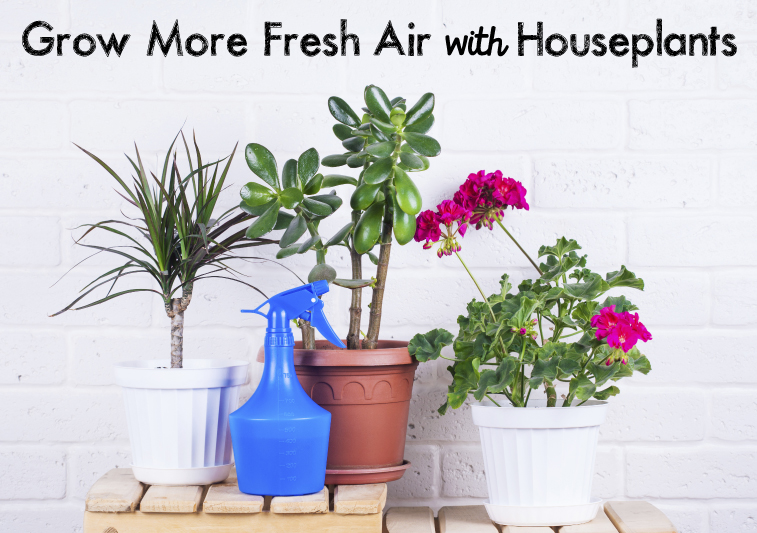 houseplants_blog